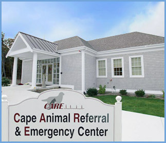 Cape Animal Referral & Emergency Center